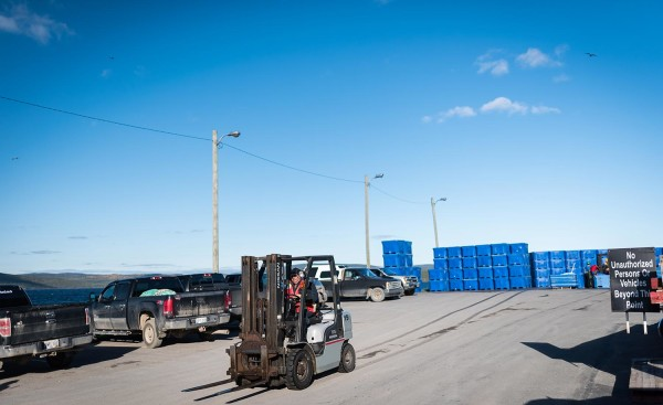 labrador ndc fisheries forklift processing