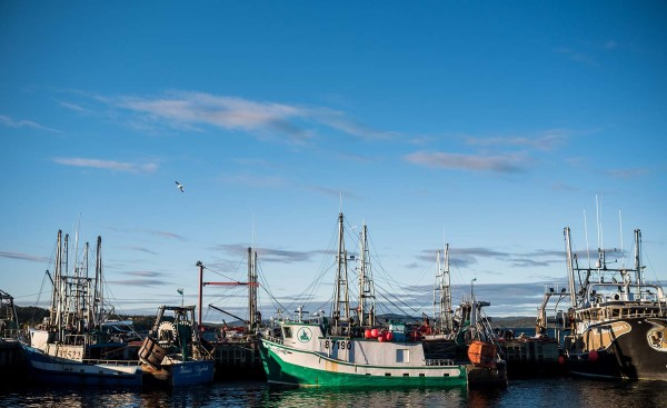 Labrador Fisheries Wharf Boats Charlettown