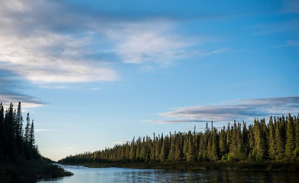 Labrador River Scenery Trees